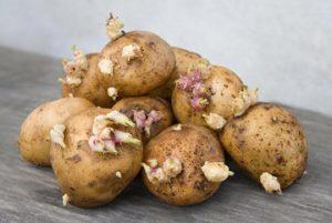rostki-kartofelnie